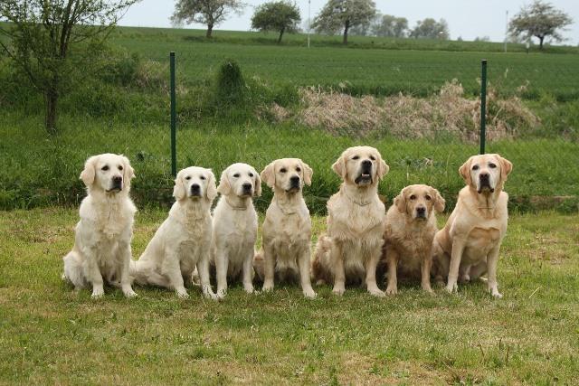 Dog Pack Leader Training